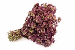 Dried Creeping Thyme Stock Images