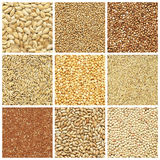 Dried crop collection Royalty Free Stock Images