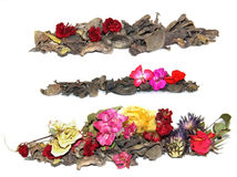 Dried crumpled leaves money tree and withered flowers geraniums,. Dried crumpled leaves money tree Crassula and withered flowers geraniums , photo manipulation Stock Photo