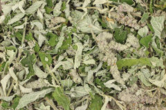 Dried crushed mint leaves background Royalty Free Stock Photography