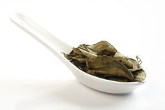 Dried Curry Leaves Stock Photos