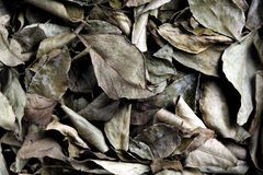 Dried curry leaves, close-up Stock Photo