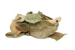 Dried curry leaves Stock Photography