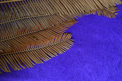 Dried cycad leaf texture. Dried cycad leaves on blue towel background Royalty Free Stock Photos