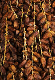 Dried dates - abstract background Stock Image