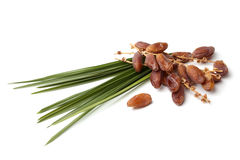 Dried dates with leaf Royalty Free Stock Photos