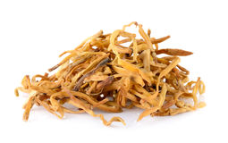 Dried Day Lily Stock Images