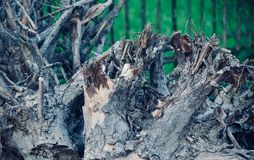 Dried and dead large tree parts photograph royalty free stock photos