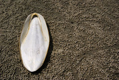 Dried Dead Squid Bone on Sand. Dead squid's bone lying on the sand of a beach Stock Photo