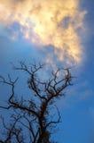 Dried dead tree against a beautiful sky Stock Photos