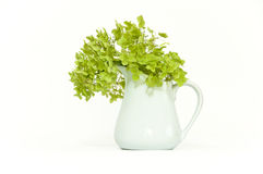 Dried delicate green hortensia (hydrangea) flowers. In white pottery vase on isolating background Stock Images