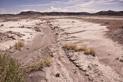 Dried Desert Stream Stock Images