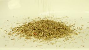 Dried dill fray on the white surface. Close-up stock video