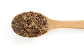 Dried dill seeds in spoon Royalty Free Stock Photos
