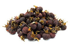 Dried dog rose hips, Rosa Canina Stock Images