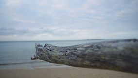 A dried driftwood in close up stock video footage