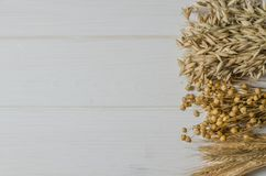 Dried ears of wheat, oats and other grains lie on a white background wood royalty free stock images
