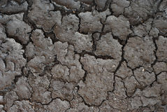 Dried earth Stock Images