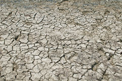 Dried earth. Stock Image