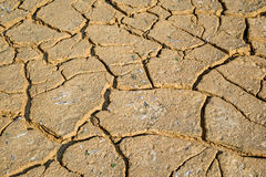 Dried earth with cracks. On summer sunny day stock photo