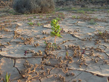 Dried earth in the desert Royalty Free Stock Photos