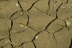 Dried Earth drought a dry stream Royalty Free Stock Photos