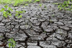 Dried earth soil with cracks an green plants. A Dried earth soil with cracks an green plants missing rain royalty free stock image