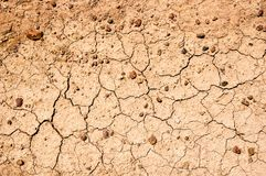 Dried earth texture Stock Images