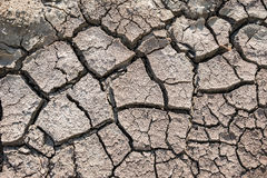 Dried earth Stock Image