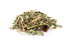 Dried Echinacea purpurea Stock Image