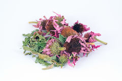 Dried echinacea purpurea in white background Royalty Free Stock Photography