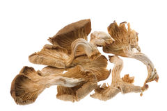 Dried Edible Mushrooms. Isolated image of dried edible mushrooms Stock Images