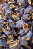 Dried eggplant at bazaar Stock Photos