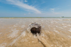 Dried and empty coconuts on a beach Royalty Free Stock Photography
