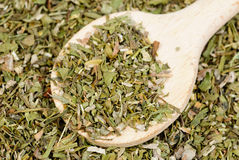Dried  estragon spice  and wooden spoon  as  food  background Royalty Free Stock Image