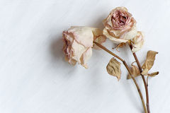 Dried faded roses on old paper on wooden background. 