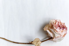 Dried Faded Roses On Old Paper On Wooden Background Stock Photo