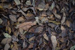 Dried fall leaves on the forest ground in autumn.  Royalty Free Stock Photography