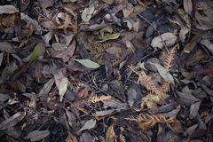 Dried fall leaves on the forest ground in autumn.  Royalty Free Stock Photo