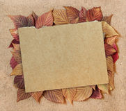 Dried fall leaves of plants, elements raspberry leaves laid out. On cardboard with a place for accommodationon  background for scrapbook, object, roughage Stock Photo