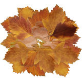 Dried fall leaves of plants, flowers and branches, isolated elem. Ents on white  background for scrapbook, object, roughage autumn leaf, a piece of thin Stock Image