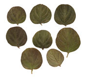 Dried fall leaves of plants, flowers and branches isolated eleme. Nts, white, background for scrapbook, wooden planks, object, roughage autumn leaf, small green Stock Image