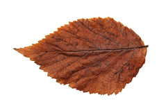 Dried fall leaves of plants, isolated elements on white backgro royalty free stock photo