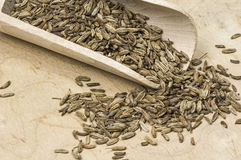 Dried fennel seed Stock Photo