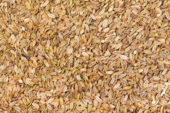 Dried fennel seeds background. Macro photo Royalty Free Stock Images