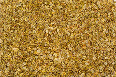 Dried Fennel Seeds Stock Image