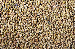 Dried fenugreek seeds Royalty Free Stock Photos