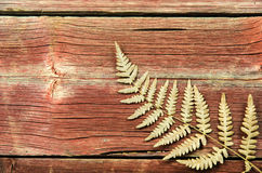 Dried fern detail Stock Images