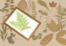Dried fern in a frame. On a natural background Royalty Free Stock Photos