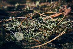 Dried fern leaves and green moss on an old stump. stock photos